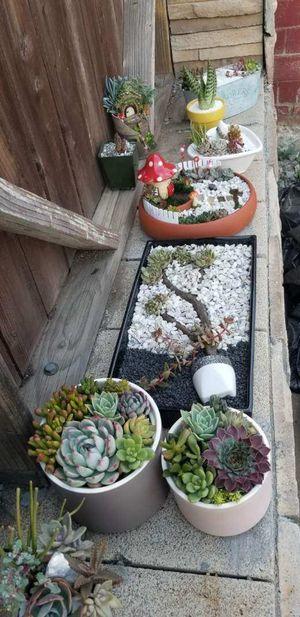 Succulent Arrangements for Sale in City of Industry, CA