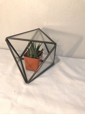 Glass Succulent Holder for Sale in San Diego, CA