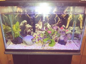30 gallon fish tank with stand for Sale in Butte, MT