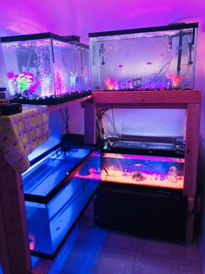 7 home aquariums for Sale in New Baltimore, MI
