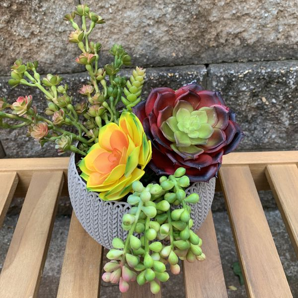 Assorted Artificial Succulents (Package of 5 pieces)