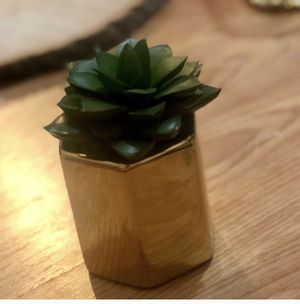 Cute chic faux succulent for Sale in Milford, MA