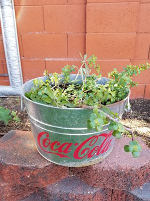 Coca Cola rusty planter with succulents for Sale in Gilbert, AZ