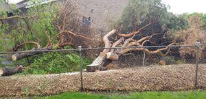 Fire wood for Sale in Warren, MI