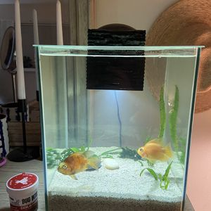 Fluval Chi Aquarium And Fish for Sale in Seattle, WA