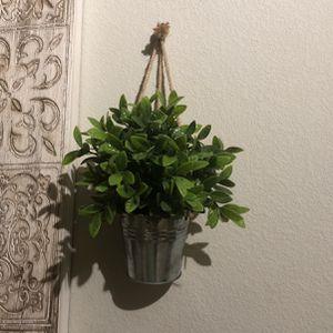 Decor Plants for Sale in Denver, CO