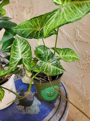 Assorted plants for Sale in Tampa, FL