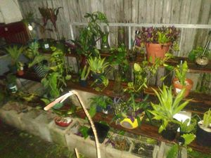 Plants on Sale for $5.00 and up for Sale in Port Charlotte, FL