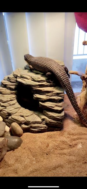Reptile tank for Sale in Houston, TX