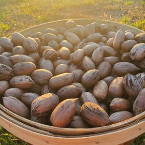 Pecans for Sale in Prosperity, SC
