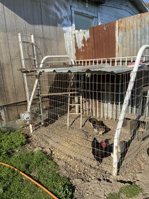 Chicken cage for Sale in Lodi, CA