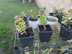 Plants for Sale in Anaheim, CA