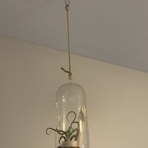 Air Plant Hanging Glass Decor for Sale in Lexington, KY