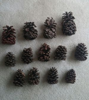 Natural Rustic Pine Cones/Lot Of 35/Assorted Sizes for Sale in MONTGOMRY VLG, MD