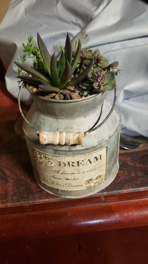 Succulent arrangements for Sale in Rochester Hills, MI