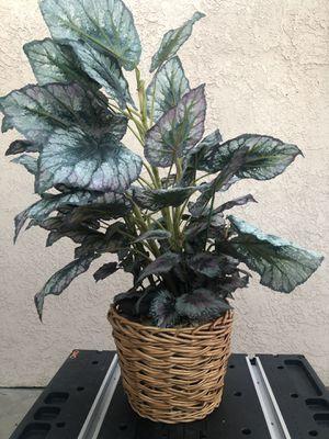 Fake plant for Sale in San Fernando, CA