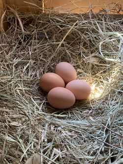 Free Range Chicken Eggs for Sale in Houston,  TX