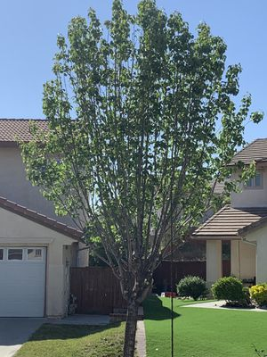 Complete tree care for Sale in Pasadena, CA