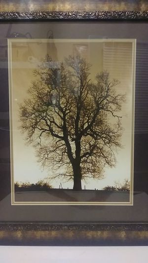 """20""""24 tree picture for Sale in Riverside, CA"""