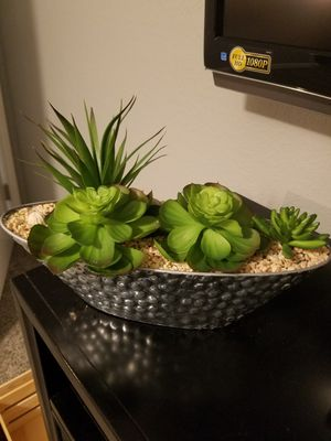 Decorative plants for Sale in Bedford, TX