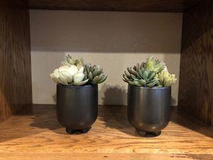 Succulent plant home decor for Sale in Scottsdale, AZ