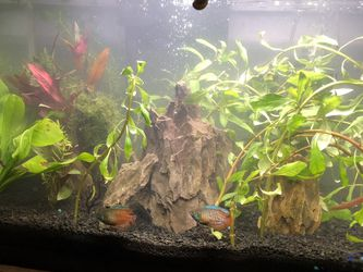 40 Gal tall *Fish not included* for Sale in College Park,  MD