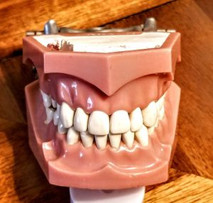 Model full denture. for Sale in San Diego, CA