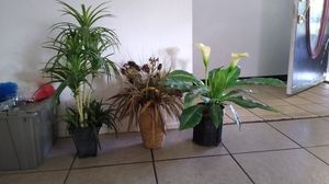 Plants for Sale in Bartow, FL