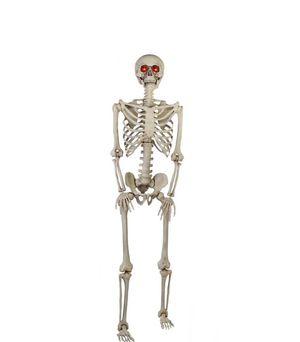 Skeleton 5ft for Sale in Montclair, CA