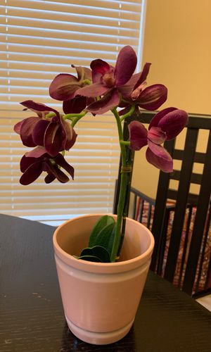 Fake orchid plant with decorative pot for Sale in Carrollton, TX