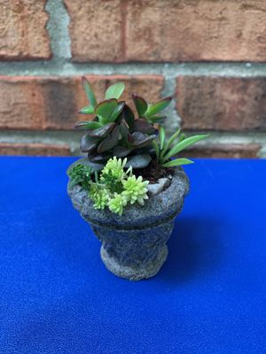 Jade plant in cute small pot for Sale in Sterling Heights, MI