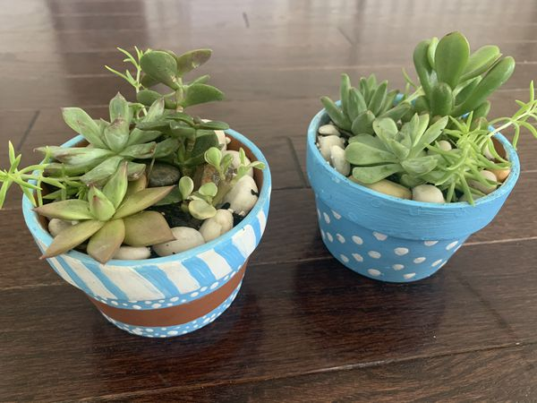 "Succulent arrangement real live plants in 3"" terra-cotta hand painted pots"