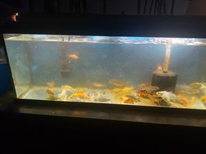 Fish tank pond decorations for Sale in Westminster, CA