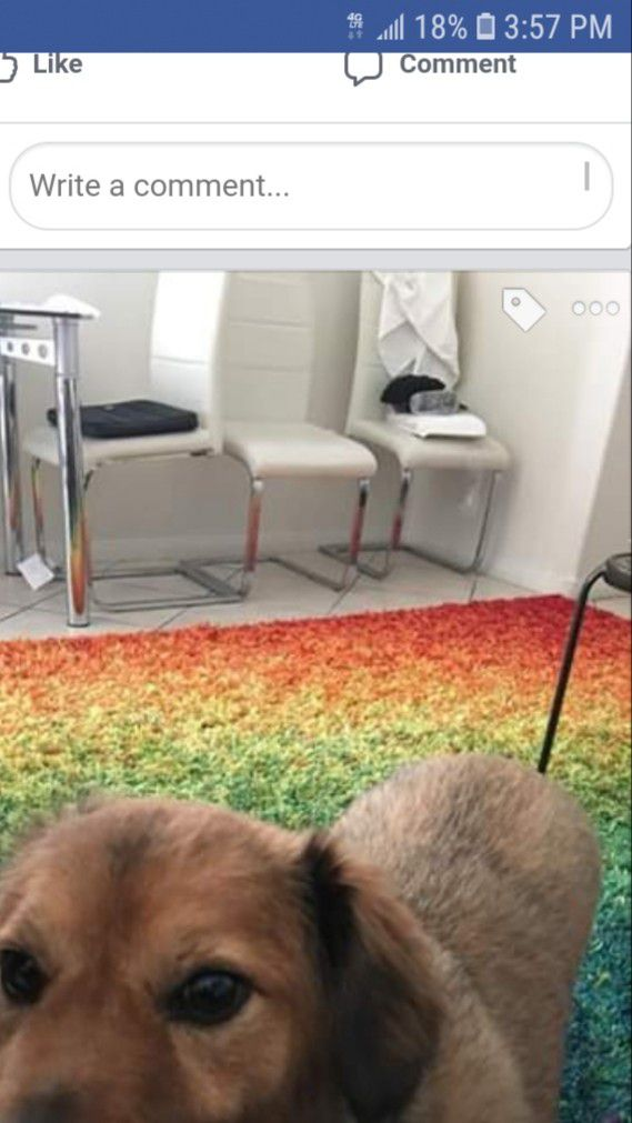 Rainbow Shag Rug. EXCELLENT condition. 12×12 ft.