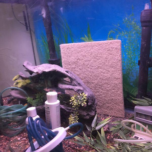46 gal Aquarium + Supplies and Stand