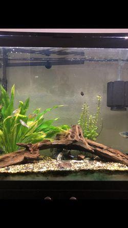 45 Gallon Fish Tank for Sale in San Jose,  CA