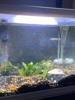 Aquarium / Fish Tank for Sale in Stanford,  CA