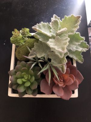 Artificial succulent decor for Sale in Winter Park, FL
