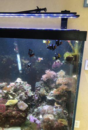 Aquarium, nine clown fish for Sale in FL, US