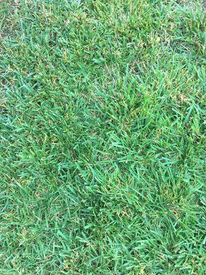 Sod/ grass for Sale in Riverside, CA