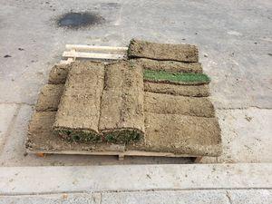 Grass riamuida for Sale in Fresno, CA