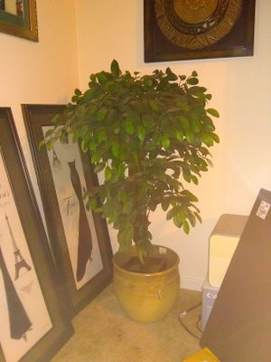 Artificial standing house plant in pot for Sale in Winter Haven, FL