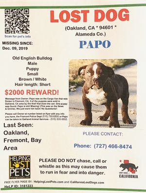 Stolen Puppy - Reward - Please Call if you Have Info for Sale in San Francisco, CA