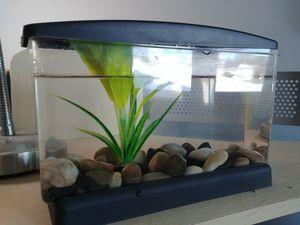 Calm View Betta Tank & Decor for Sale in Orland Hills, IL