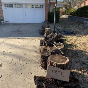 Free Logs for Sale in Columbia, MO