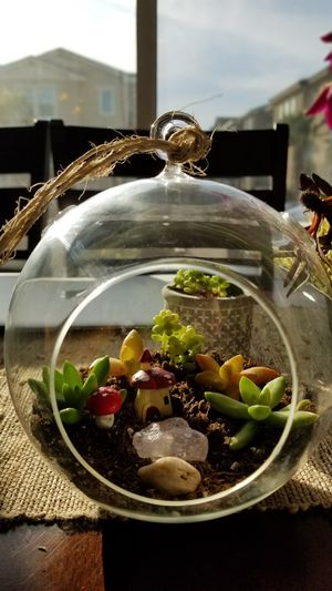 Terrarium succulent arrangement for Sale in Chino Hills, CA