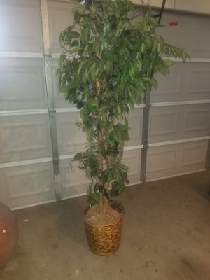 Home decor plant for Sale in Cedar Hill, TX