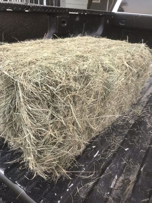 Award winning coastal hay for Sale in Ferris, TX