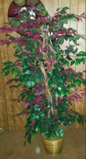 Super Nice Authentic Looking Artificial Plant!!! for Sale in Vancouver, WA