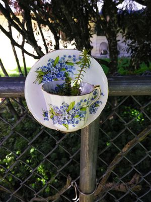 Teacup planter for Sale in Turner, OR